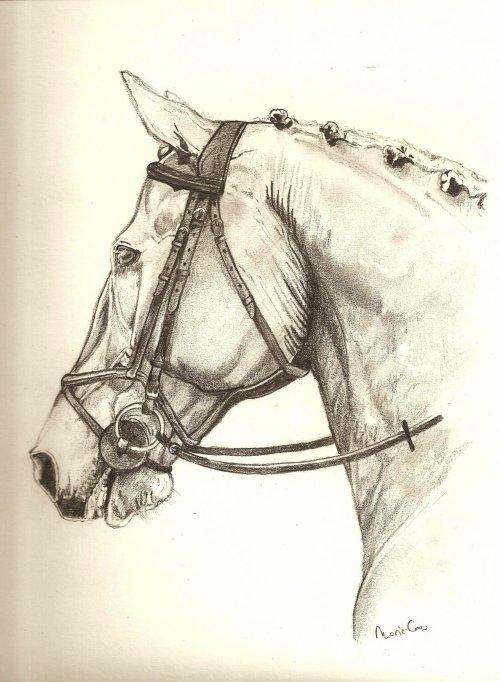 Blog de dessins chevaux mes dessins - Chevaux dessins ...